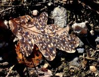 Little gems in Ashdown Forest
