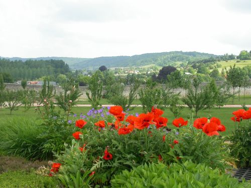 Poppies in France