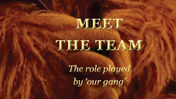 Cover for Meet the Team