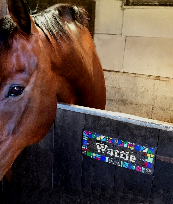 wattie stable (002)