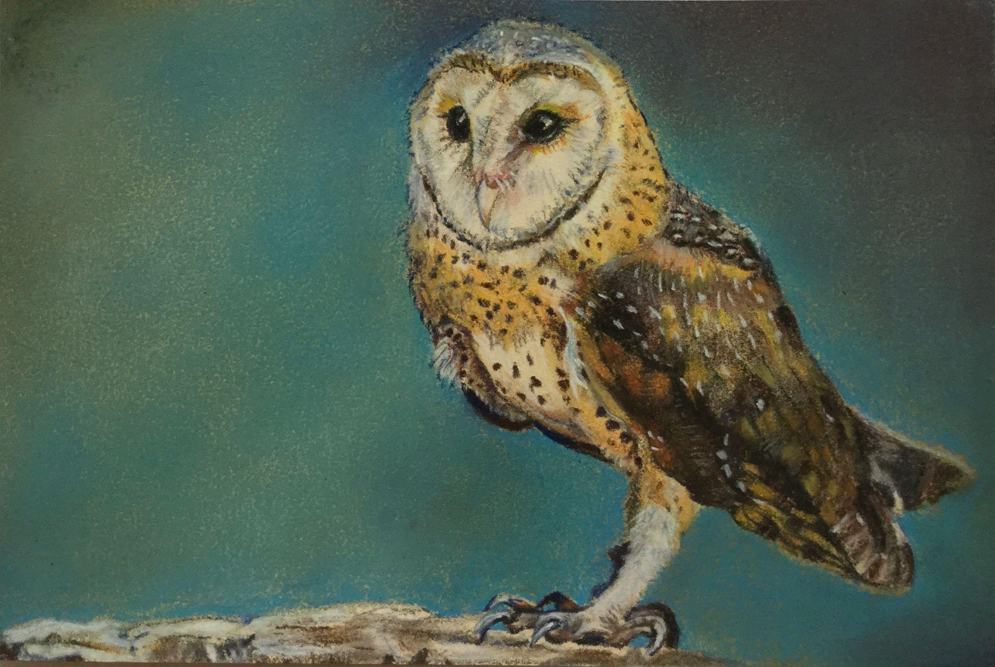Barn Owl Wildlife Painting