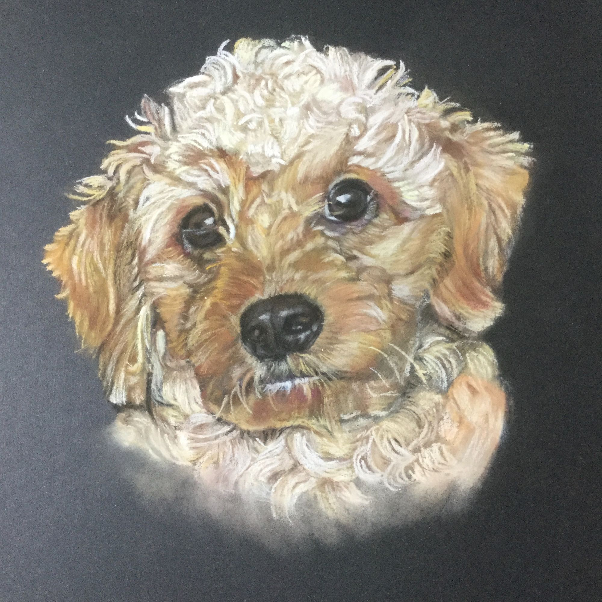 Dog Pastel Painting - Cavapoo