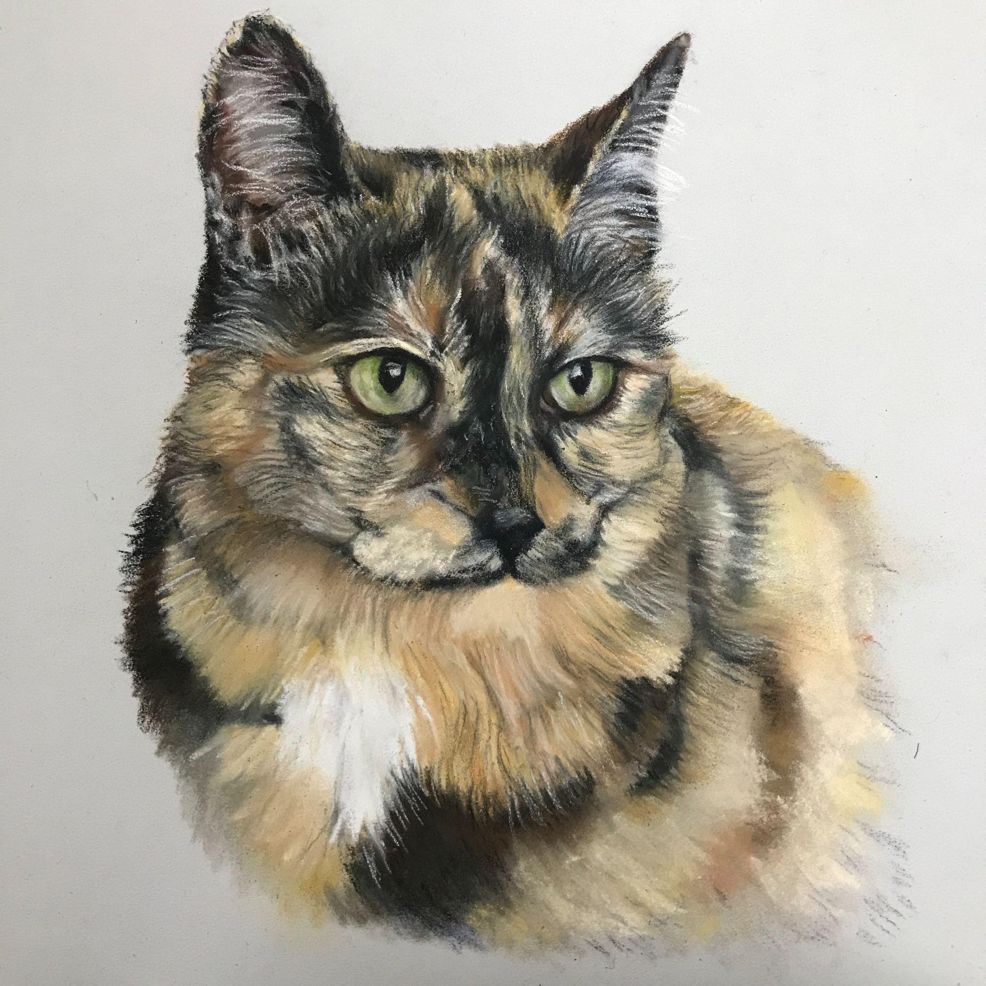 cat pet portrait final layers