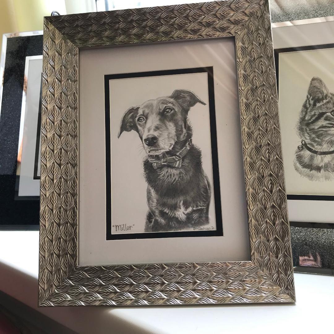 Dog Pencil Drawings