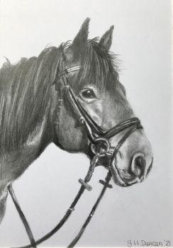 A5 Pencil Pet Portrait