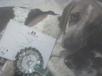 daredevil with his puppy kennel club award