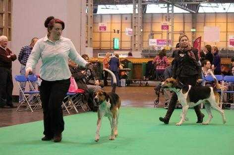 dawson at crufts