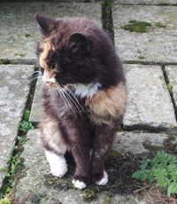 Jessie cat