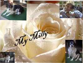 My Milly
