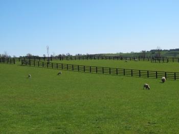 2015 Fencing PnR field