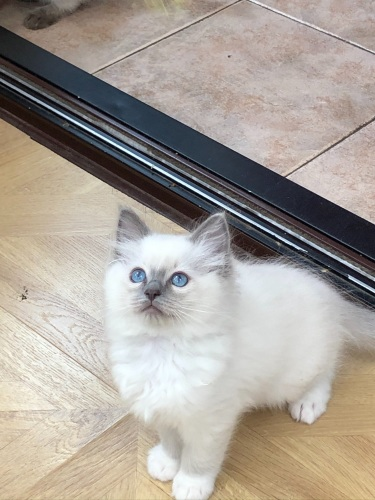 Blue mitted 😻