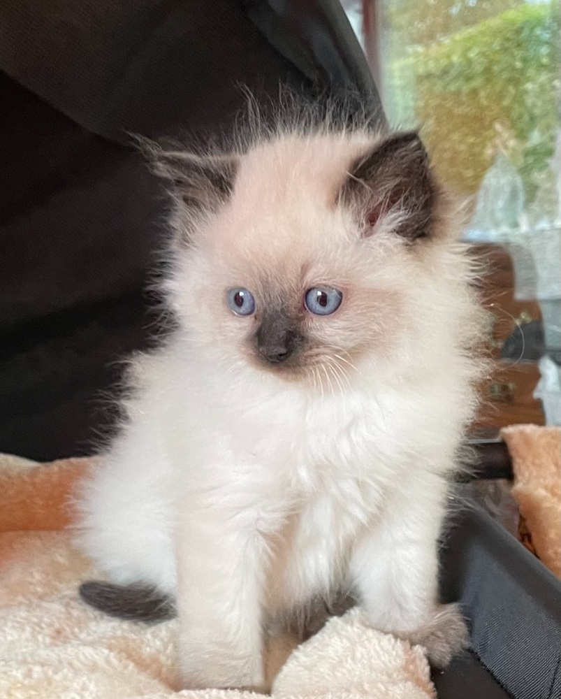 Seal mitted girl 10/10