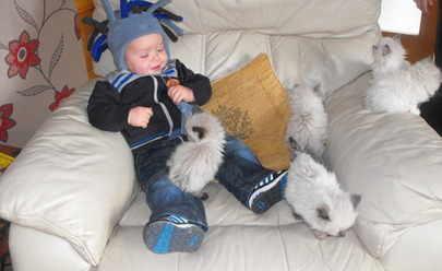 Grandson joe with kittens
