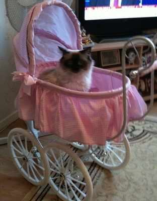 saffy in pram
