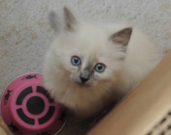 kitten20171