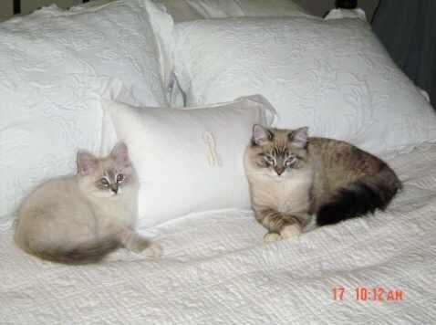 Lindas kittens