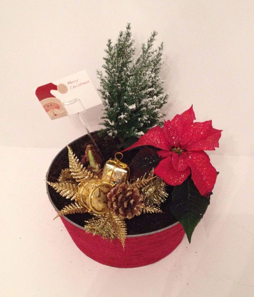 25cm Round - Indoor Christmas planter