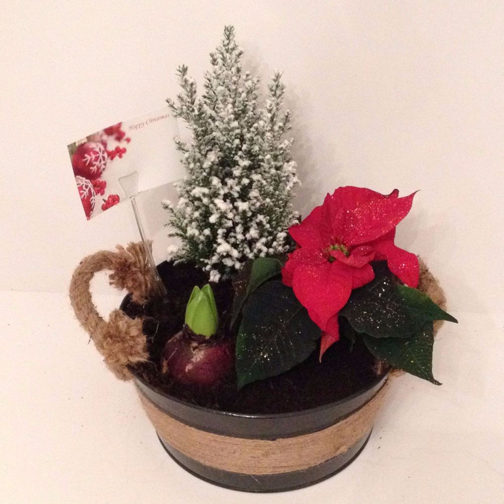 22cm Circular Indoor Christmas themed planter
