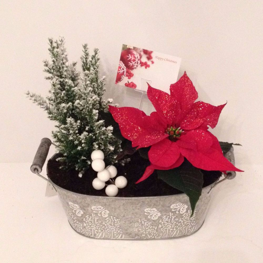 25cm Oval trough - Indoor Christmas planter gift