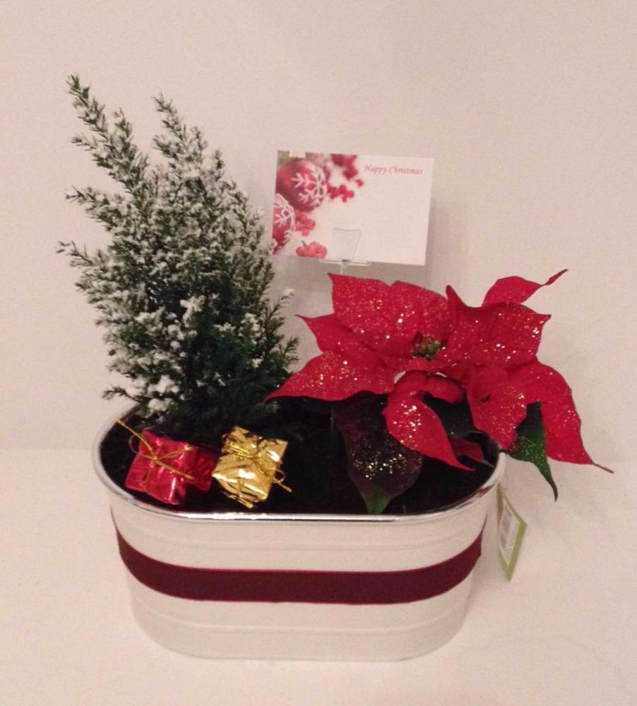 23cm Oval planter - Indoor Christmas gift
