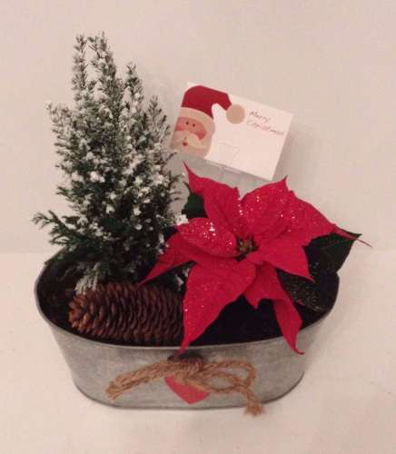 25cms Oval planter - Indoor Christmas gift arrangement