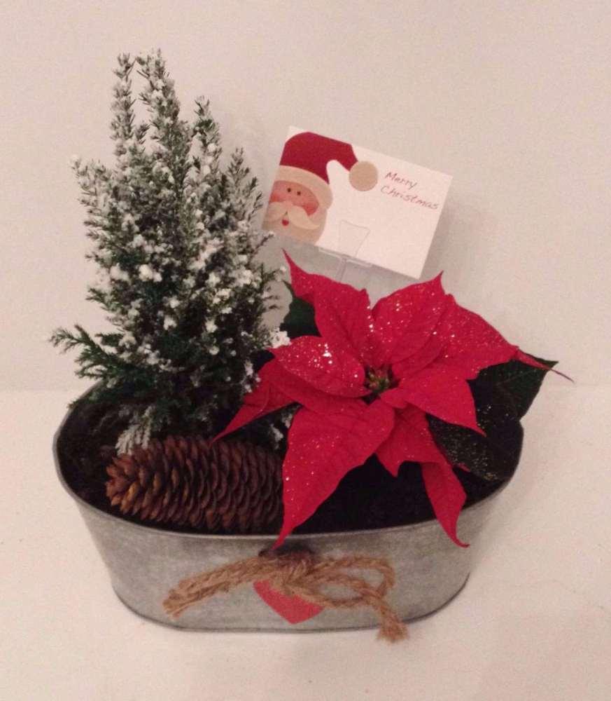25cms Oval planter - Indoor Christmas gift arrangement