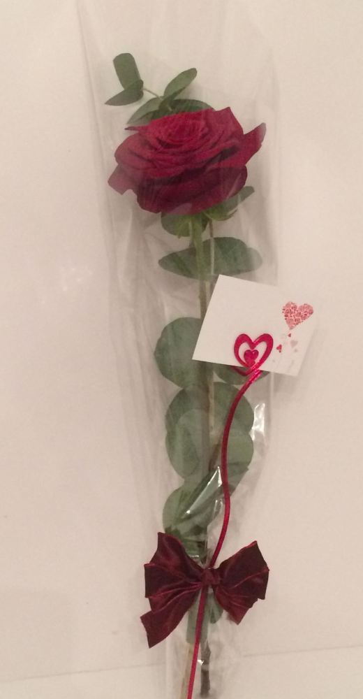 Premium Long Stem single Red Rose