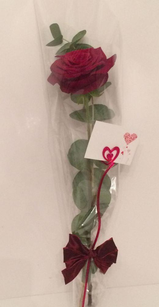 Premium Long Stem single Red Rose