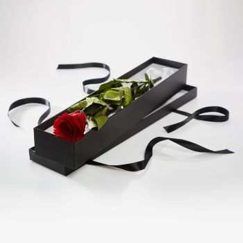 Premium Long Stem single Rose in a Luxury silk lined presentation box - for that special someone - Black, Pink or Ivory presentation box