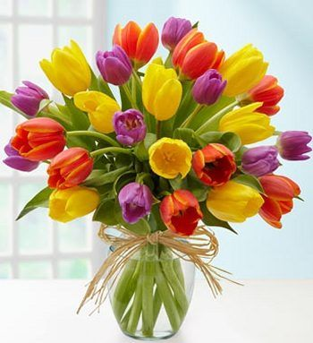 Beautiful spring fresh tulips hand tied in a vase - £27.99 FREE local delivery
