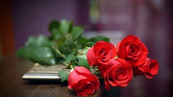 JUST Roses - luxury bunch of Red Roses - order by the stem - local delivery in Aylesbury, local towns and villages - £3.25 per stem