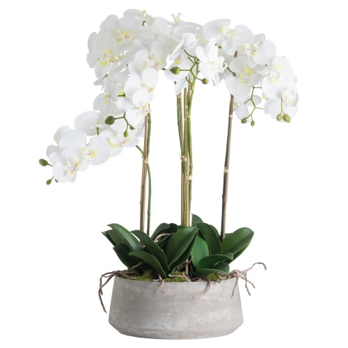 Large White Orchid In Stone Pot