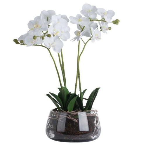 White Orchid In Glass Pot