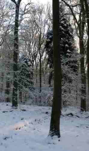 haughaw wood in the snow