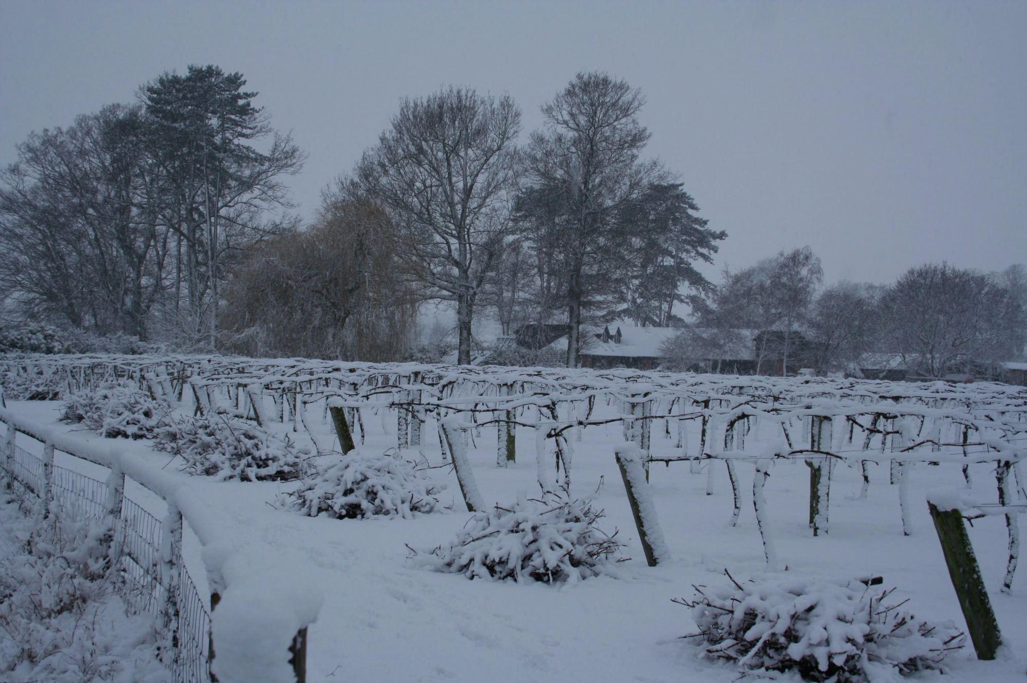 snowy prunings