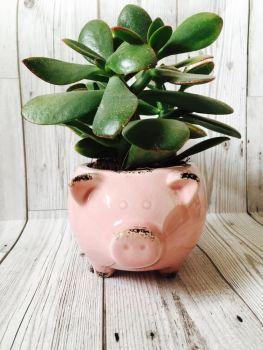 Ceramic Piggy Planter