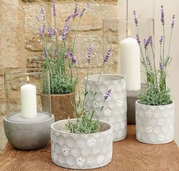 Concrete Bee Planter (S)