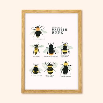 Collection of British Bees Print