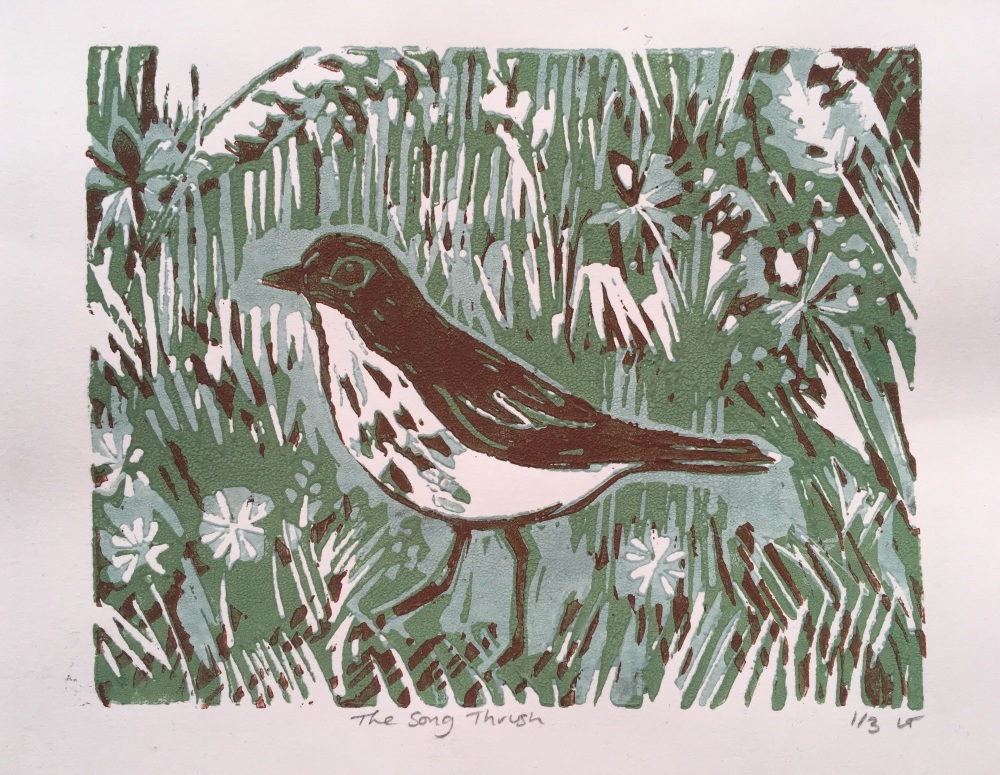 Song thrush .limited edition