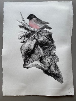 Bullfinch , original print