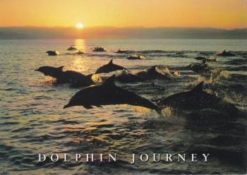 Dolphin Journey     Postcard