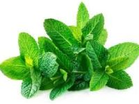GENUINE MINT FLAVOUR ORIGINAL ORGANIC  MINT FLAVOUR SAUCE 1KG  SHIP FROM UK