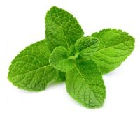 MINT FLAVOUR  500g  ORGANIC  MINT FLAVOUR SAUCE 500g  SHIP FROM UK