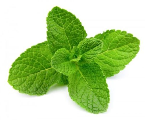 MINT FLAVOUR  500 g  ORGANIC  MINT FLAVOUR SAUCE 500g  SHIP FROM UK