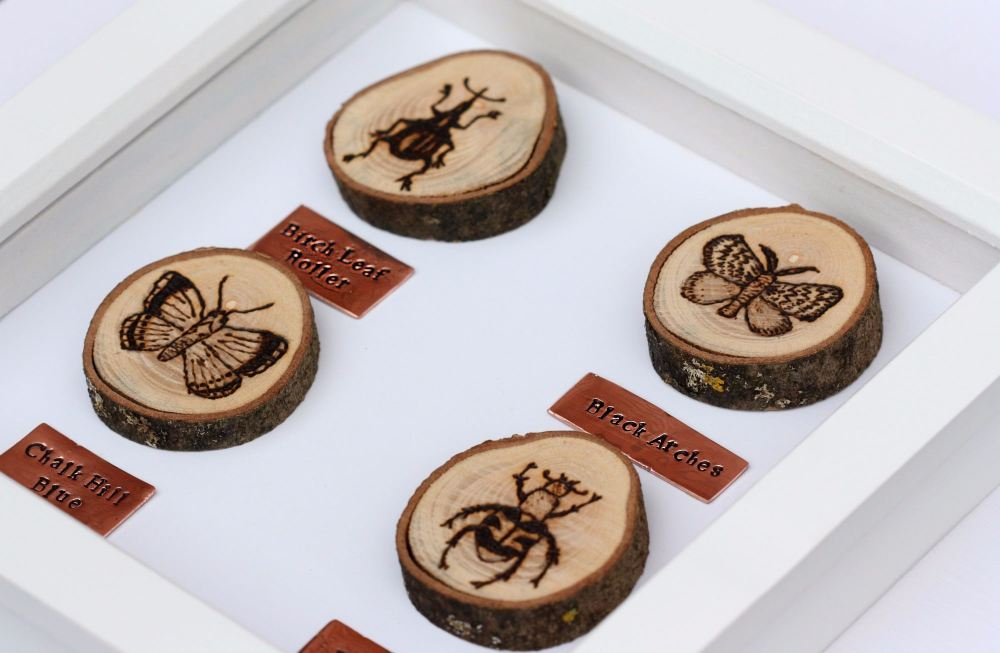 Wooden Framed Four Insects - Butterfly & Beetle
