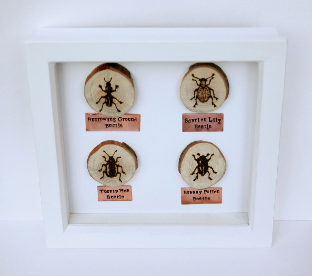 Wooden Framed Four Insects - Beetle Group 2