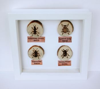 Wooden Framed Four Insects Wall Decor - Beetle Group 2