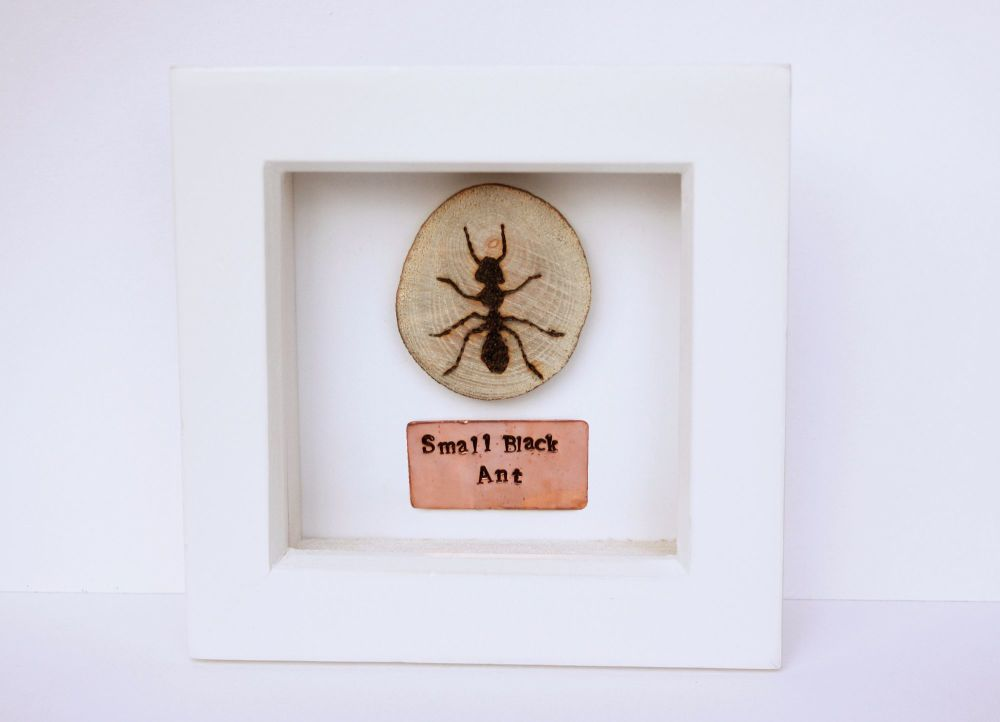 Wooden Framed Insect - Small Black Ant