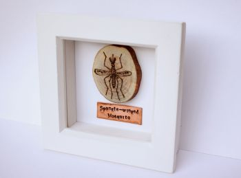 Wooden Framed Insect - Spangle-winged Mosquito