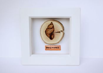 Wooden Framed Pond Life Creature - Pond Snail
